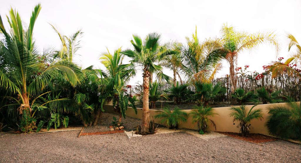 3muros-rammed-earth-Todos-Santos-Baja-a10studio-landscaping-01